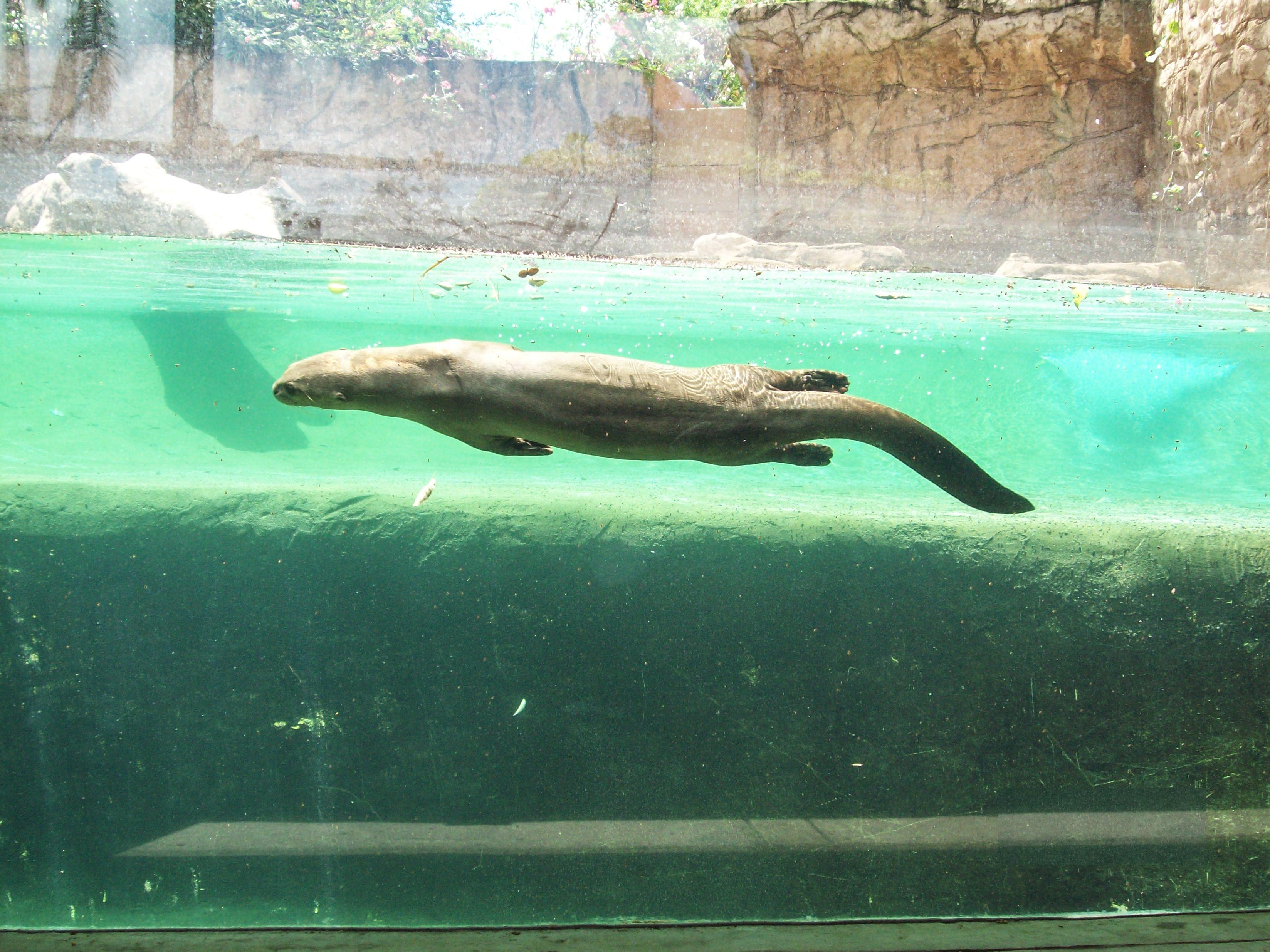Emperor Valley Zoo Destination Trinidad And Tobago