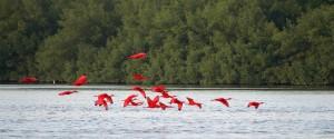 caroni-swamp-and-bird-sanctuary-Caroni-4