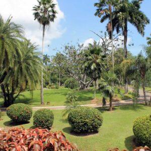 Botanic Gardens, Trinidad
