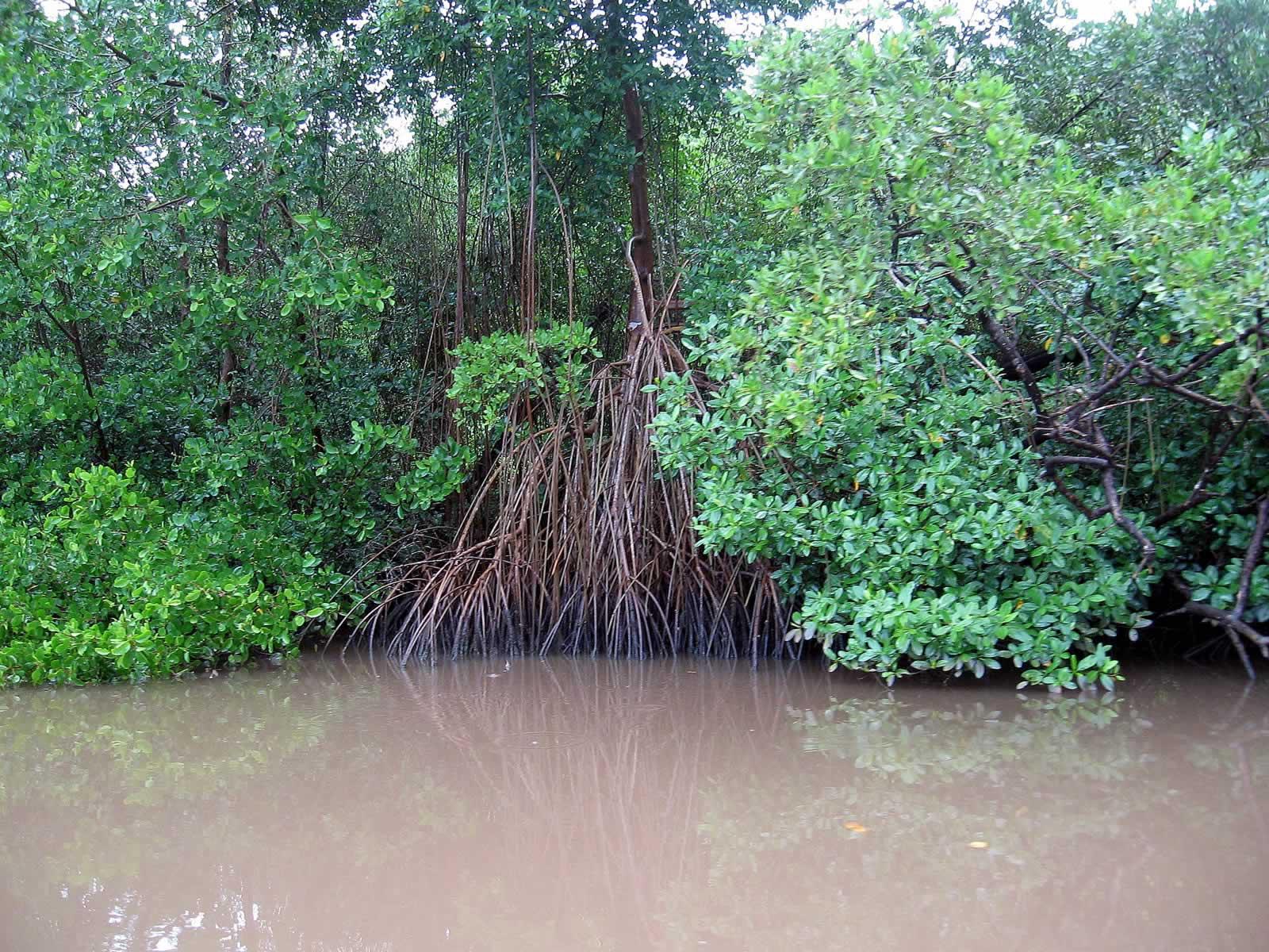 Caroni Swamp And Bird Sanctuary Destination Trinidad And