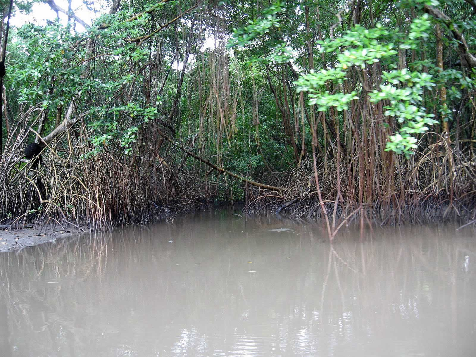 Caroni Swamp And Bird Sanctuary Destination Trinidad And Tobago Tours Holidays Vacations