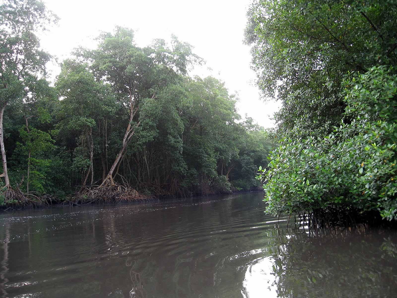 Caroni Swamp And Bird Sanctuary Destination Trinidad And Tobago Tours Holidays Vacations