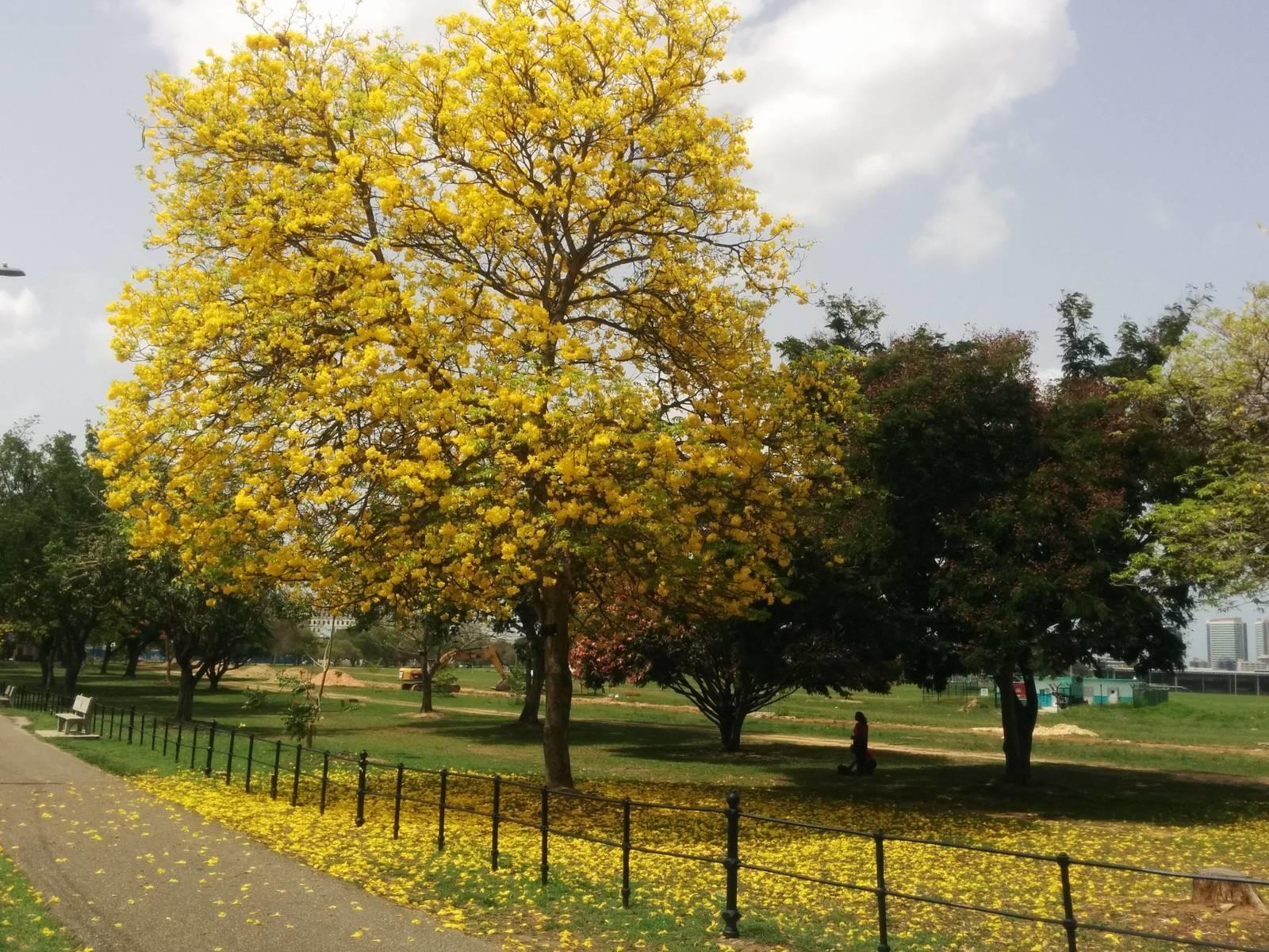 Queen S Park Savannah Destination Trinidad And Tobago