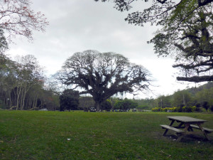 fs_samaan-park-P1040013