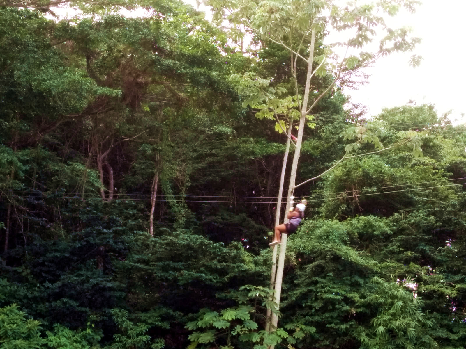 Ziplining in Tucker Valley, Chaguaramas, Trinidad