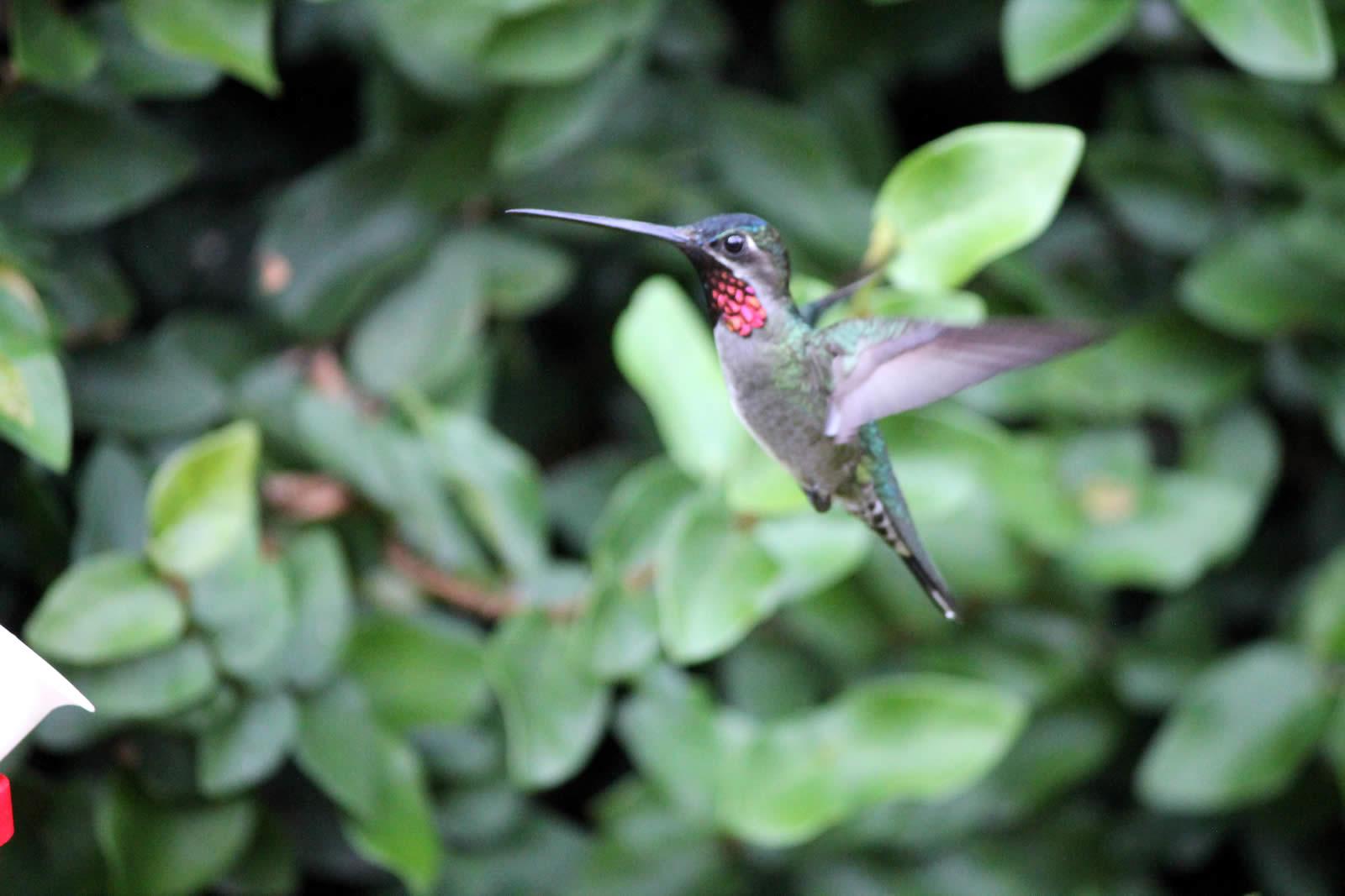 Experience Life Outdoors in Trinidad & Tobago