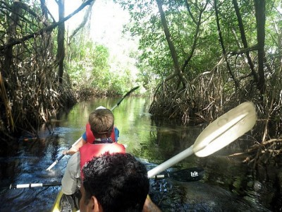 Kayaking through the mangrove of Nariva Swamp.